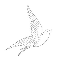 flying white dove vector image