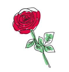 Rose flower hand drawn isolated icon vector