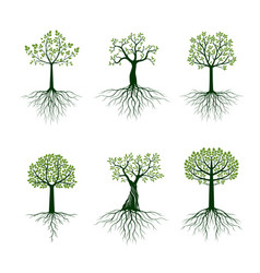 Set trees and green leaves and roots vector