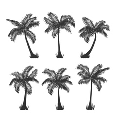 coconut palm trees silhouette set on white vector image