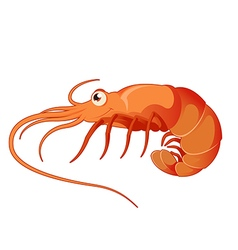 Cartoon shrimp vector image