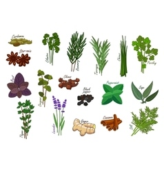 Spice and kitchen herb condiment ingredients vector