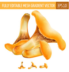 Chanterelles on white background vector