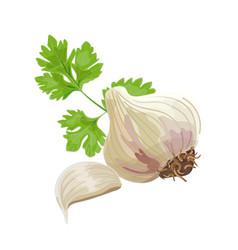 Garlic and parsley vector