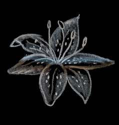 hand drawing chalk flower lily vector image