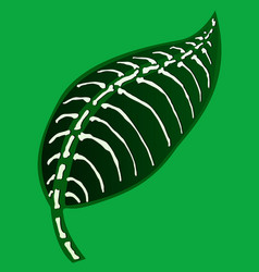 Leaf green skeletal vector