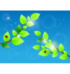 leaves and ladybird vector image