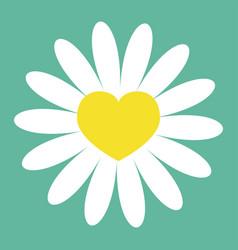 white daisy chamomile icon yellow heart center vector image