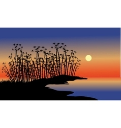 Silhouette of bamboo tree in beach vector image