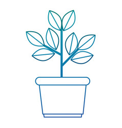 house plant in pot vector image vector image
