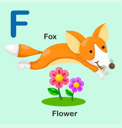 isolated animal alphabet letter f-fox-flower vector image vector image