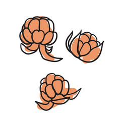 Berries hand drawn isolated icon vector