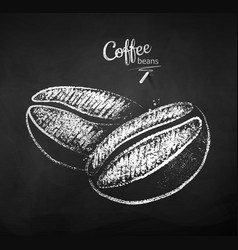 black and white chalk sketch coffee beans vector image