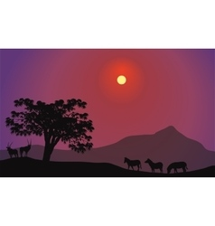 Silhouette of zebra and antelope vector image