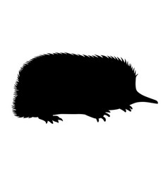 spiny anteaters vector image