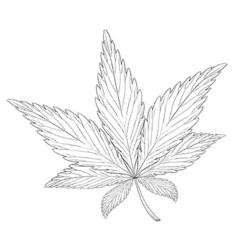 Leaf of the plant Cannabis sativa vector image
