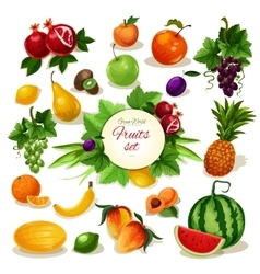 Organic fruit poster for food juice drink design vector image
