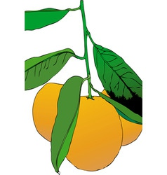 three mandarins vector image