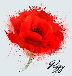 Abstract watercolor poppy flower vector image