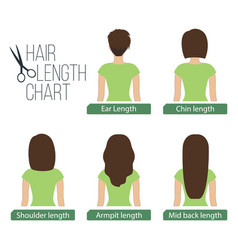 Hair length chart back view vector
