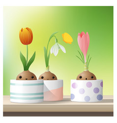 hello spring flower with crocus tulip snowdrop vector image