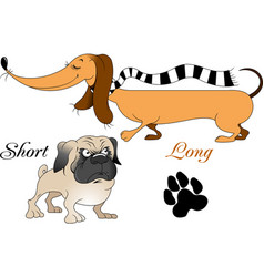 two dogs vector image
