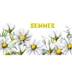 Chamomile summer background watercolor vector