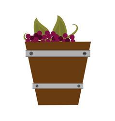 grapes in bucket vector image