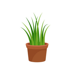 green home decorative plant for interior design vector image