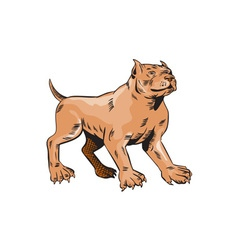 Pitbull Dog Mongrel Standing Etching vector
