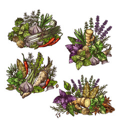 condiment spice and herbs bunches vector image