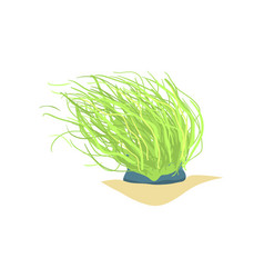 Flat of long green sea plant coral vector