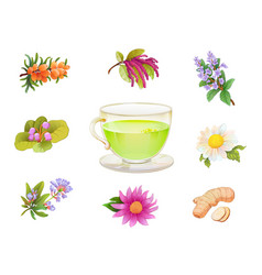 tea herbal additives set realistic herbs and vector image
