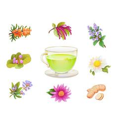 tea herbal additives set realistic herbs vector image