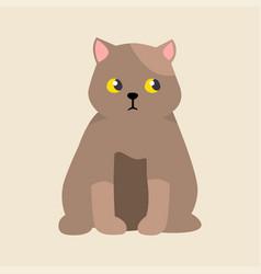 cat breed british shorthair cute pet portrait vector image