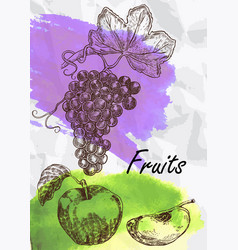 grape and apple fruits vector image