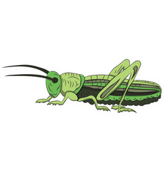Green grasshopper on a white background vector