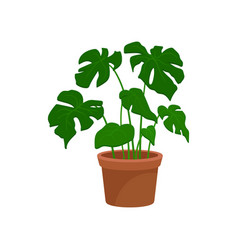 Monstera home decorative plant houseplant for vector