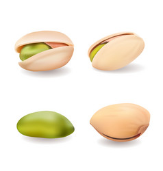 Realistic whole and cracked pistachio nuts vector