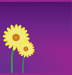 yellow daisy flower background vector image