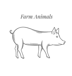 Hand drawn pig icon vector image
