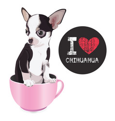 i love chihuahua vector image vector image