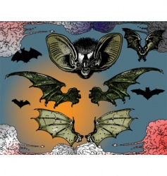 bats wings vector image