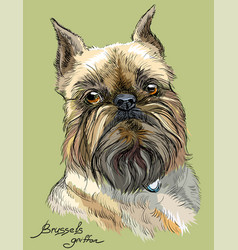 Colored brussels griffon dog portrait vector