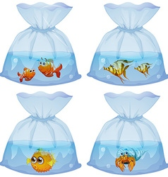 Different kind of fish in the bags vector image