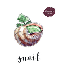 cooked snail with leaf of parsley vector image