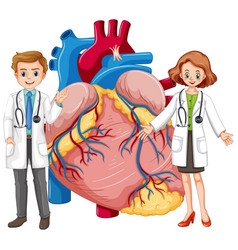 Human heart with two doctor cartoon character vector