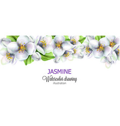 Jasmine watercolor drawing with flowers on top vector