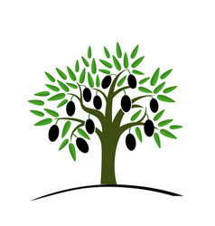 Olive tree with green leaves tree with black vector