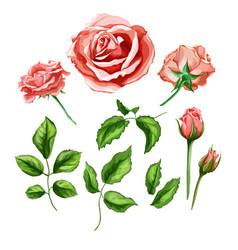 realistic rose flower leaves stem set vector image